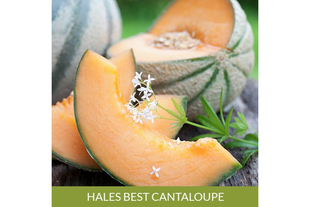 Hales Best Cantaloupe