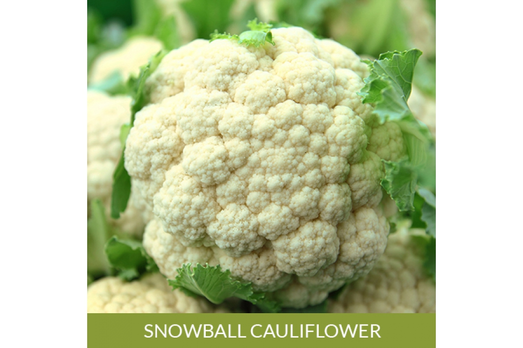 Snowball Cauliflower