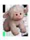 Lori's Baby Lamb