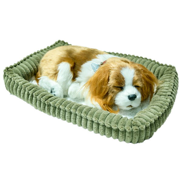 Perfect Petz King Charles Spaniel Puppy