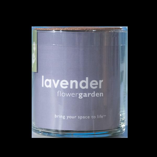 Essential-Lavender-Garden