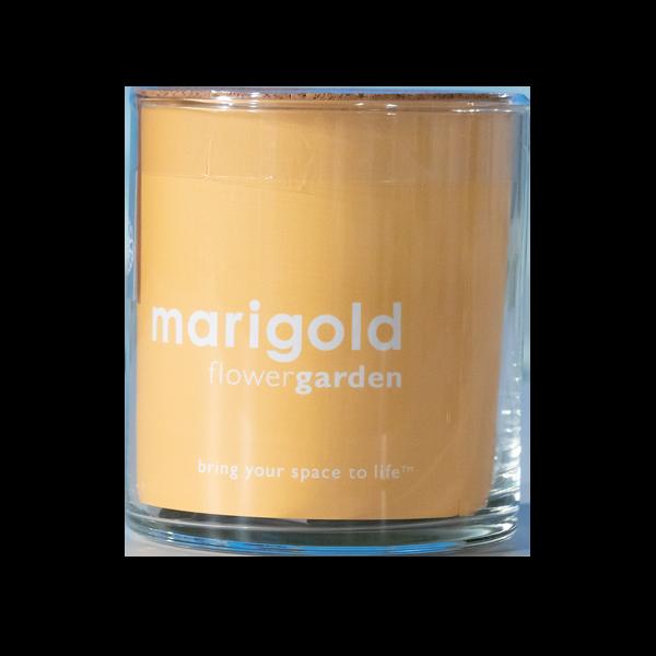 Essential-Marigold-Garden